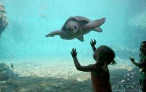 Observation d'une tortue marine à La Réunion