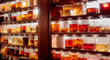 L'impressionante collection de rhums arrangés de l'hôtel